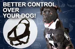 Buy Dog Harness UK