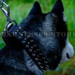 Good Dog Collar for Husky of Leather with Spikes and Studs