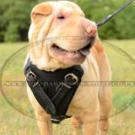 Shar-Pei Harness of Padded Leather, Extra Strong and Comfy