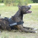 Dog Training Harness of Strong Nylon with ID Patches for Amstaff