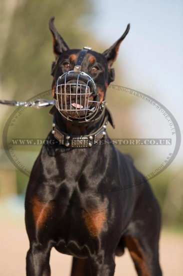 Bestseller! Doberman Muzzle of Wire Basket Design