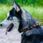 Husky Collar for Walking of Narrow Leather with Square Studs