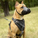 Dog Walking Harness of Strong Leather for Pitbull, Bestseller