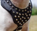 Studded Dog Harness Leather with Padded Chest for Bull Terrier
