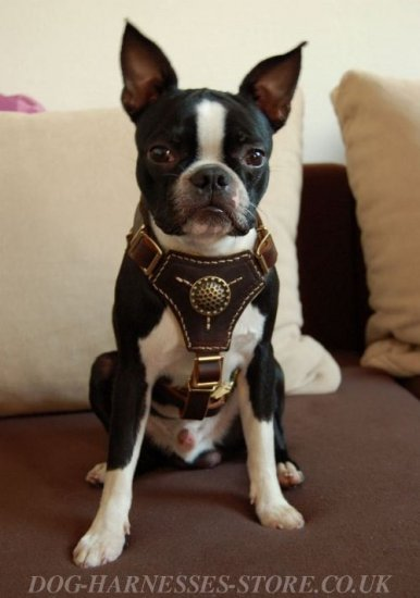 Best Boston Terrier Harness, Royal Design and Nappa Padding