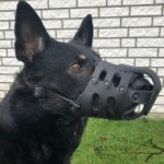 German Shepherd Dog Muzzle Leather for Daily Use