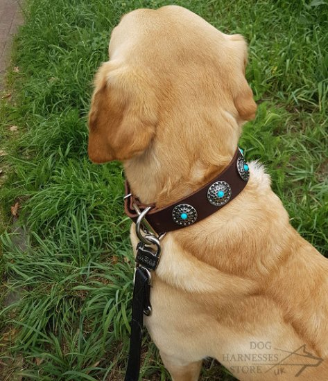 Labrador Collar Leather with Silver-Like Circles and Blue Stones