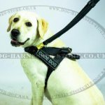 Leather Guide Dog Harness with Long and Short Handles