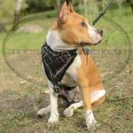 Amstaff Harness with Barbwire Hand Painting on Genuine Leather