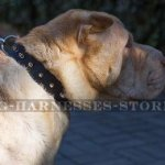 Collar for Shar-Pei of Narrow Leather with Row of Spikes