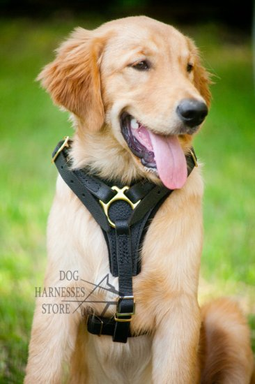 Bestseller! Labrador Harness UK of Leather for Walking Dogs