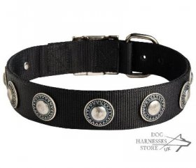 Saint Bernard Dog Collar of Nylon with Vintage Conchos