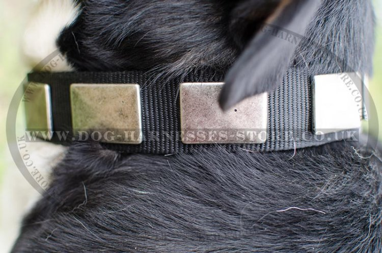 Swiss Mountain Dog Collars - Strong Nylon with Plates
