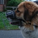 Wire Basket Dog Muzzle for Leonberger-Caucasian Shepherd
