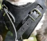 Bull Terrier Harness with Padded Chest Plate for Agitation Work