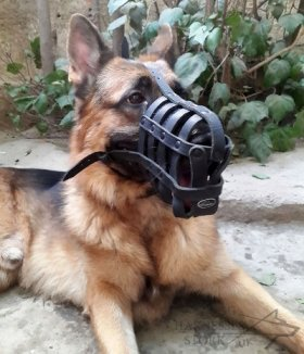 Leather Dog Muzzle for Every Breed, Best for Everyday Use