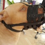 Leather Dog Muzzle for Pitbull, Perfect for Everyday Use