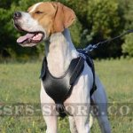 Pointer Harness of Classic Style, Genuine Leather, Padded Chest