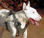 Best Brass Spiked Leather Dog Harness for Miniature Bull Terrier