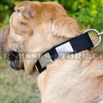 Shar-Pei Collar of Nylon with Large Nickel Plates for Daily Use
