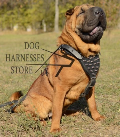 Bestseller! Spiked Leather Dog Harness for Shar-Pei Walking