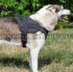 Dog Sport Harness for West Siberian Laika, Nylon, Padded