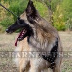 Belgian Tervuren Dog Harness with Nickel-Plated Spikes, Leather