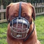Dogue de Bordeaux Muzzle of Maximum Comfort for Daily Use