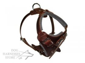 Brown Leather Harness for Dogs, Training and Walking Bestseller!