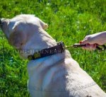 Best Leash for Labrador Retriever Short Control and Fast Grab