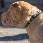 Dog Collar for Shar-Pei Walks of Narrow Leather with Brass Studs