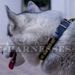 Husky Dog Collar of Narrow Leather with Brass Plates