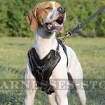 English Pointer Harness with Large Chest Plate of Thick Leather