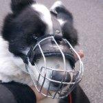 Karelian Bear Dog Lightweight Wire Basket Dog Muzzle, Bestseller