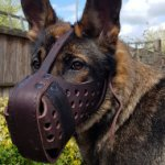 Leather Dog Muzzle for German Shepherd Agitation Training