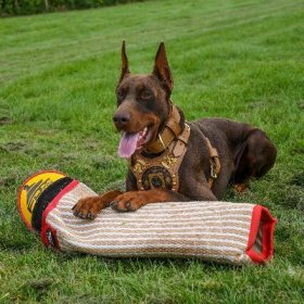 Doberman IGP Training with Bite Sleeve and Jute Cover