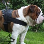 Bestseller! Old English Bulldog Harness UK Nylon Multifunctional