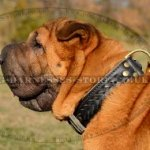 Shar-Pei Collar UK Decorated with Braids Two-Ply Strong Leather