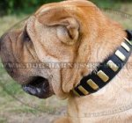 Shar-Pei Collar of Leather with Brass Plates, Trendy Design