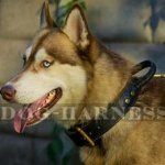 Husky Collar for Training and Walks, Two-Ply Leather with Handle