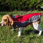 Dog Coat for Warming Beagle and Other Cute Breeds)!