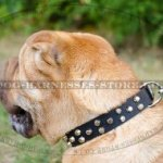 Shar-Pei Collar Leather Studded with Decorative Pyramids