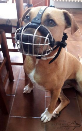 Wire Basket Dog Muzzle for Pitbull Daily Activities, Bestseller!