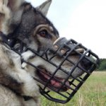 Rubberised Steel Dog Muzzle for Northern Inuit Dog