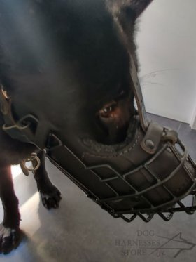 German Shepherd Basket Muzzle with Rubber Coating and Leather
