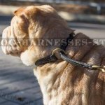 Best Collar for a Shar-Pei Obedience Training
