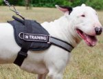 Reflective Dog Harness for Bull Terrier Training and Work