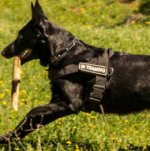 German Shepherd Harness UK for Working Dogs