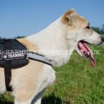 Reflective Dog Harness of Nylon for Central Asian Shepherd