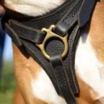 Bestseller! Leather Dog Harness for German Boxer Tracking
